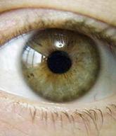 Сіро каро зелені очі. сіро зелено карі