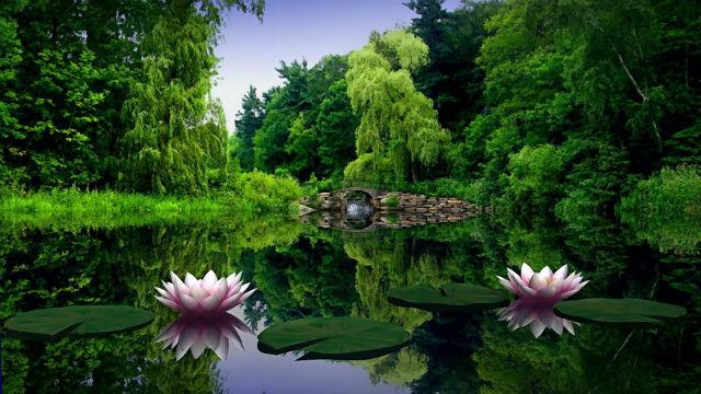 Природа: жива рослинність